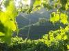 vineyards-in-valdobbiadene