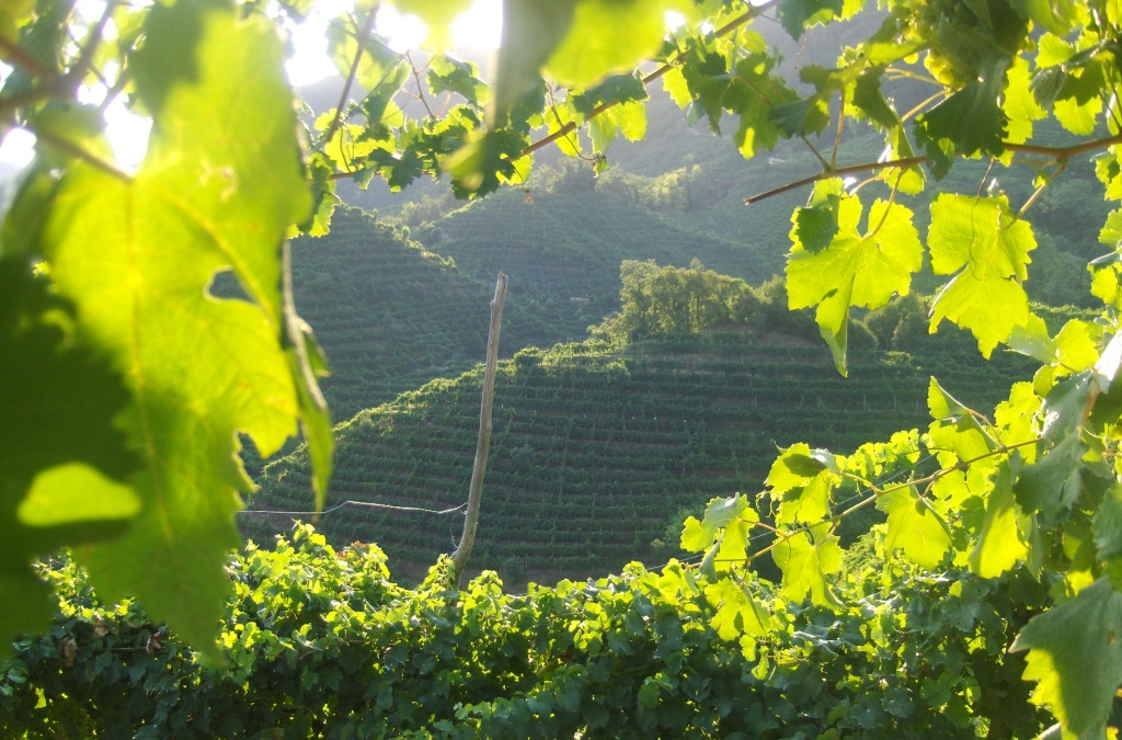 vineyards-in-valdobbiadene